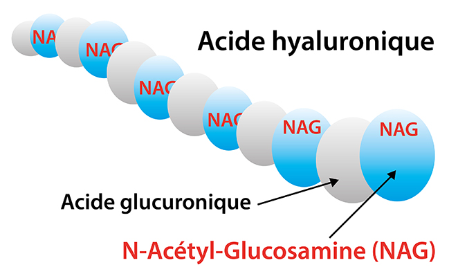 structure acide hyaluronique